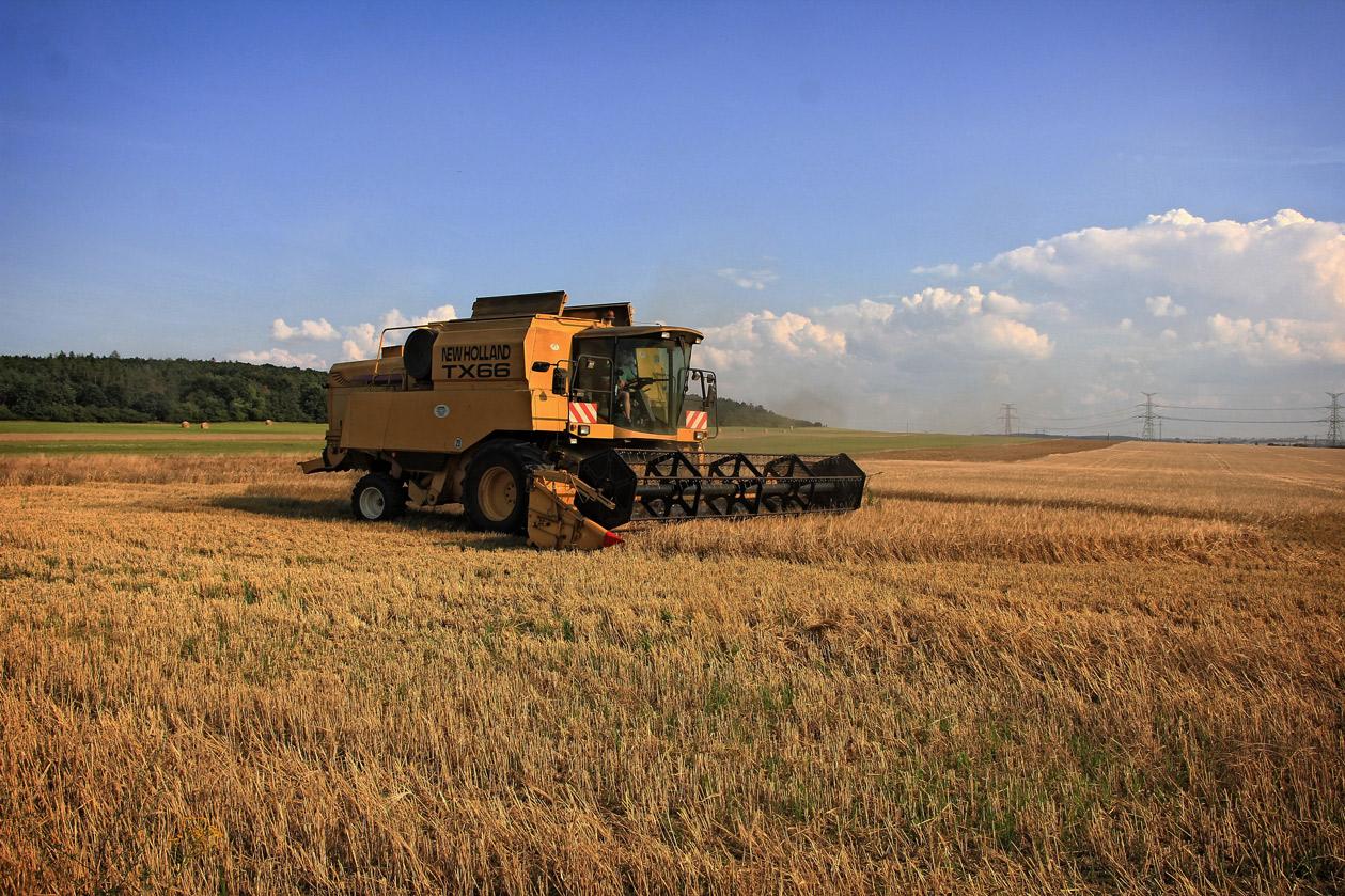 harvest-1640194
