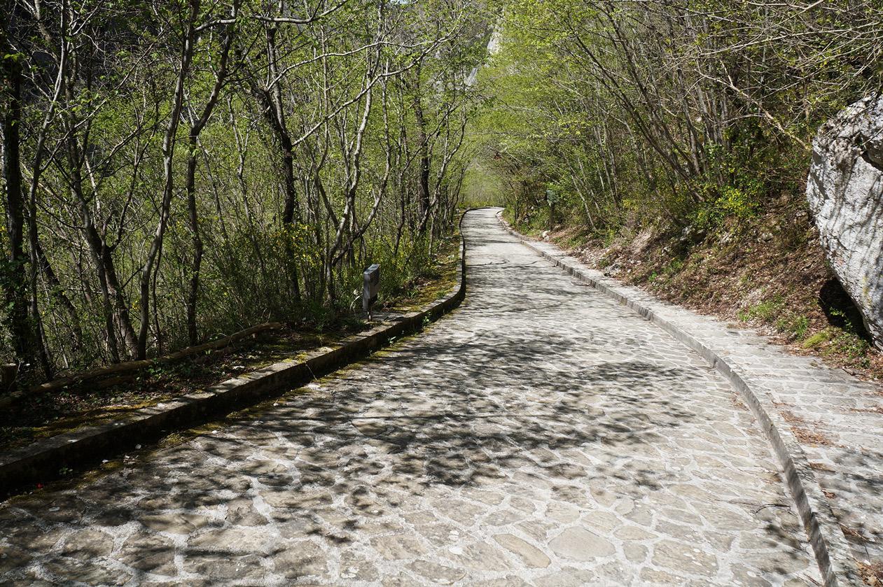 path-773477